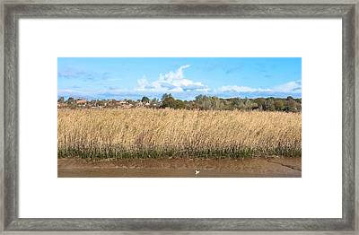 Reed Marsh Framed Print by Tom Gowanlock