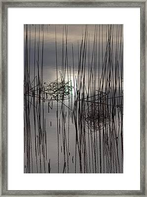 Reed Reflection 3 Framed Print by T C Brown