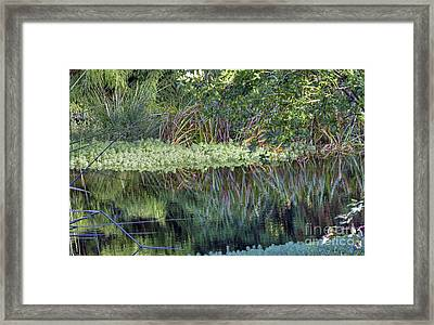 Framed Print featuring the photograph Reed Reflections by Kate Brown