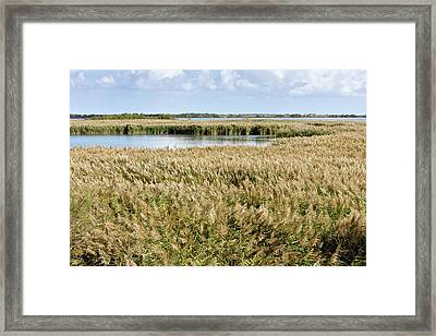 Reedbeds And Lagoons Framed Print by Bob Gibbons