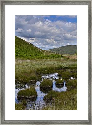 Reeds And Reflections Framed Print