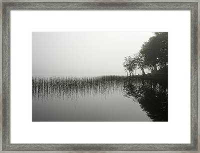 Reeds And Shore In The Mist Framed Print by Gary Eason