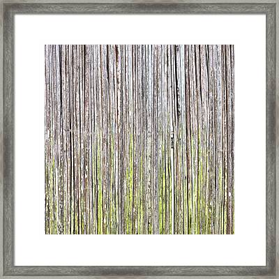 Reeds Background Framed Print by Tom Gowanlock