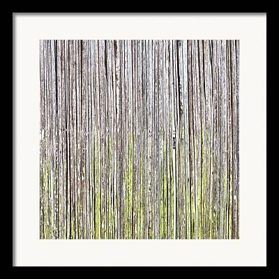 Abstract Algae Framed Prints