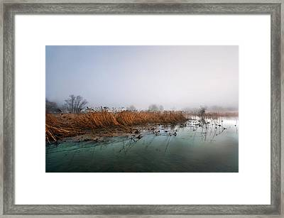 Framed Print featuring the photograph Reeds by Graham Hawcroft pixsellpix
