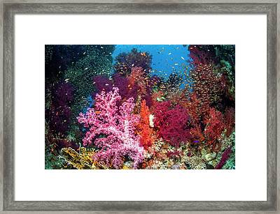 Reef Coral And Fish Framed Print by Georgette Douwma