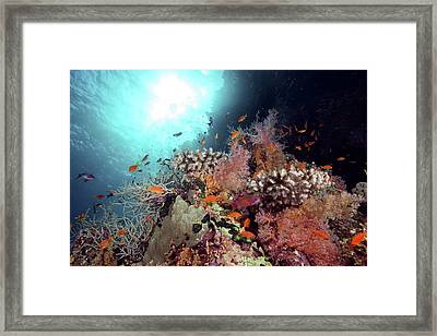 Reef Coral And Fish Framed Print