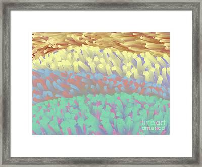 Reef Garden Framed Print