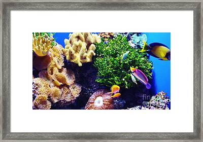 Framed Print featuring the photograph Reef Life by Brigitte Emme