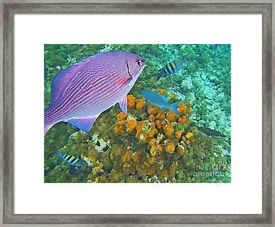 Reef Life Framed Print