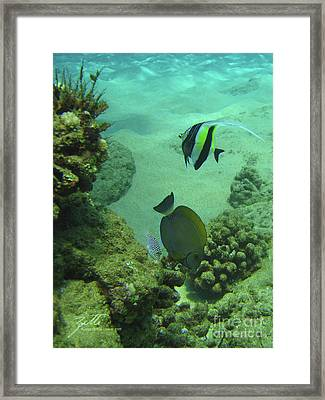 Reef Life Framed Print by Suzette Kallen