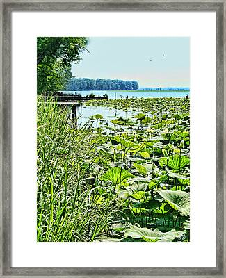 Reelfoot Lake Lilly Pads Framed Print