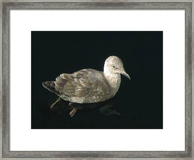 Refections Of A Gull Framed Print by Jennifer Wheatley Wolf