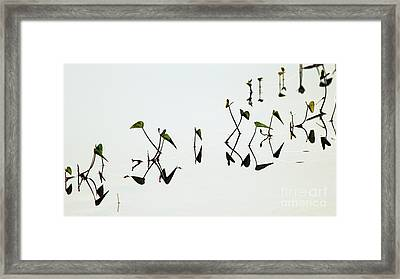 Reflect Framed Print by Vishakha Bhagat