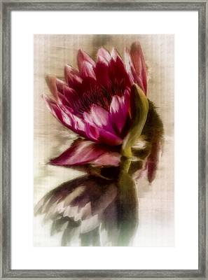 Reflected Waterlily Framed Print by Jill Balsam