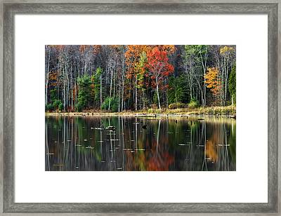 Reflecting Autumn Framed Print by Christina Rollo