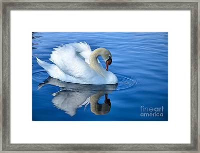 Reflecting Framed Print by Deb Halloran