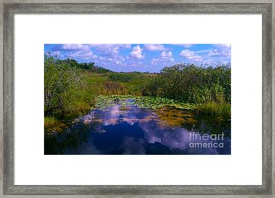 Reflecting In The Glades Framed Print