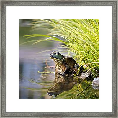 Reflecting Framed Print by Katherine White