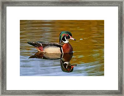 Reflecting Nature's Beauty Framed Print