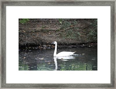 Reflecting On Grace Framed Print