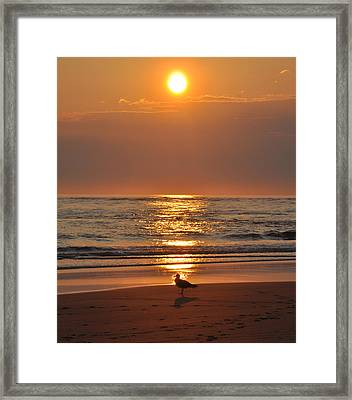 Reflecting On The New Day Framed Print by Bill Cannon