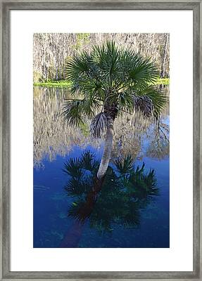Reflecting Palm Tree Silver Springs Framed Print