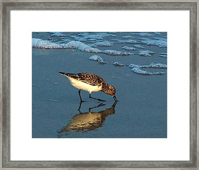 Framed Print featuring the photograph Reflection At Sunset by Sandi OReilly