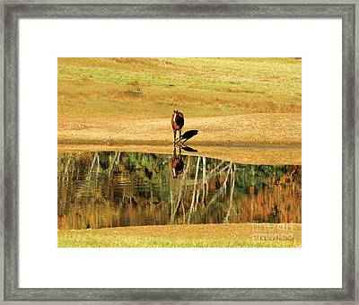 Framed Print featuring the photograph Reflection by Carol Lynn Coronios