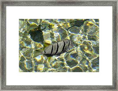 Reflection Fish Framed Print
