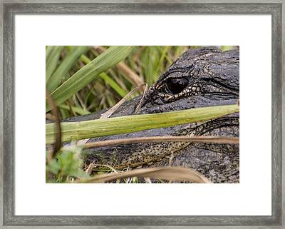 Reflection In His Eyes Framed Print by Penny Lisowski