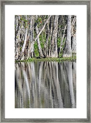 Reflection In Silver Springs River Framed Print