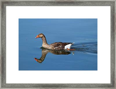 Framed Print featuring the photograph Reflection by Lynn Hopwood