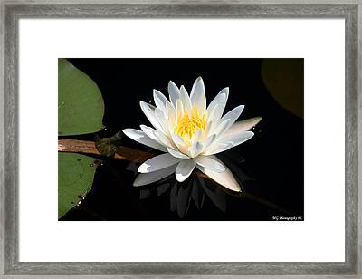 Framed Print featuring the photograph Reflection  by Marty Gayler
