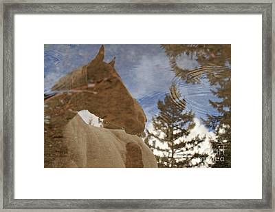 Upon Reflection Framed Print