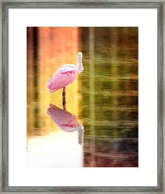 Reflection Of A Roseate Spoonbill Framed Print