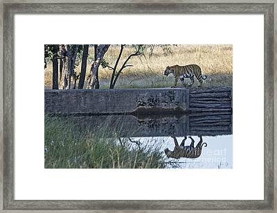 Reflection Of A Tiger Framed Print