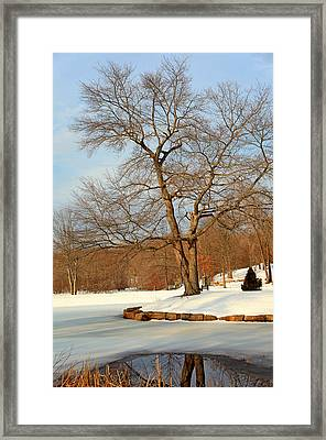 Reflection Of A Winters Day Framed Print