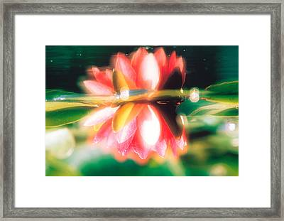 Reflection Of Flower In Pond, Lotus Framed Print