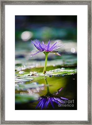 Reflection Of Life Framed Print by Charles Dobbs