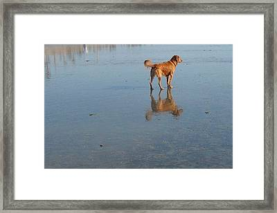 Reflection Of Rusty Framed Print by Mark Barclay