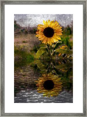 Reflection Of Sunflower Framed Print by Michelle Frizzell-Thompson