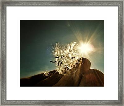 Reflection Of The Sun Framed Print by Marianna Mills