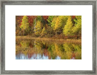 Reflection Of Trees In A Pond, Alger Framed Print
