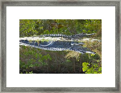 Reflection Framed Print by Wild Expressions Photography