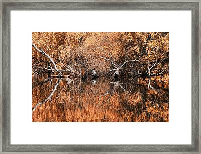 Reflections 11 Framed Print by Vessela Banzourkova