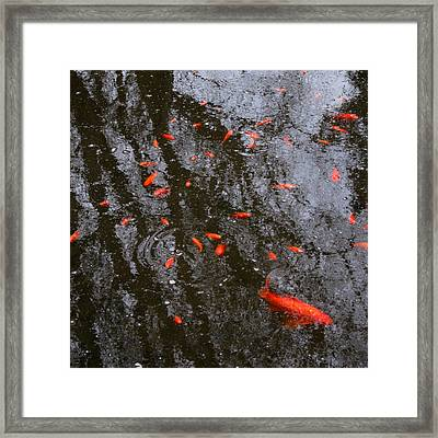 Reflections And Goldfish Framed Print