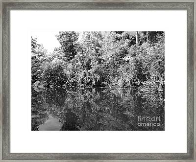 Reflections Framed Print by Carey Chen