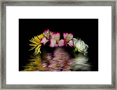 Framed Print featuring the photograph Reflections by Cecil Fuselier