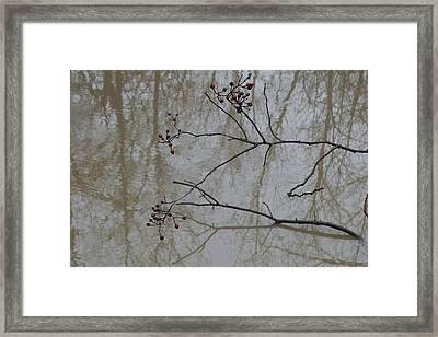 Reflections Framed Print by Daniel Kasztelan